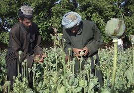Afghan National Police Arrests 30 Poppy Farmers in Helmand Province