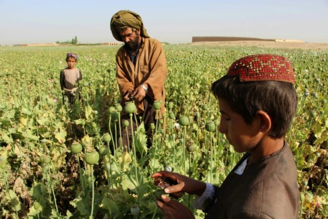 Feds: U.S.-Funded Afghan Security Chiefs 'Often Controlling' Opium Trafficking